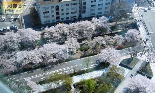 富山市役所展望塔からの風景