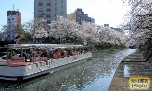日本さくら名所100選 松川の両岸の桜