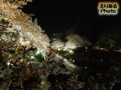松川の両岸の夜桜@富山
