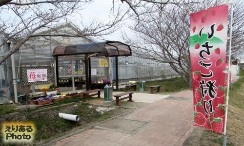 道の駅とみうら 枇杷倶楽部 いちご庭園