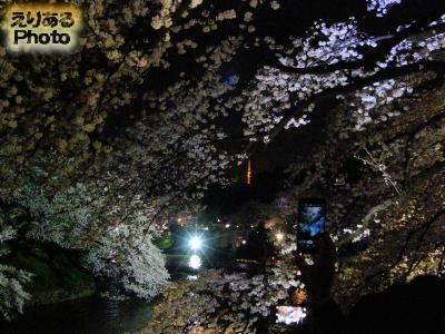 千鳥ヶ淵緑道ライトアップされた夜桜2015