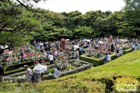 旧古河庭園バラ園「春のバラフェスティバル」