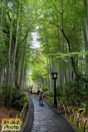 修善寺温泉 竹林の小径