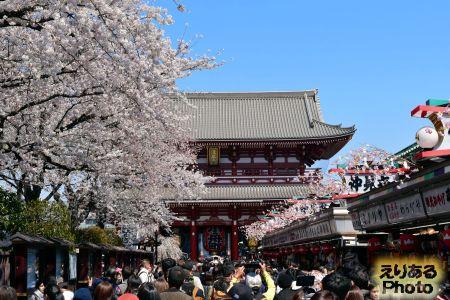 2018年浅草寺の桜