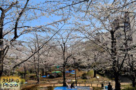 2018年隅田公園の桜