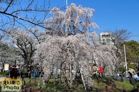 2018年隅田公園(台東区)の桜