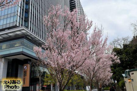 飯田橋の桜2019年