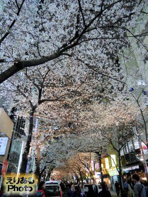 八重洲さくら通りの桜2019年