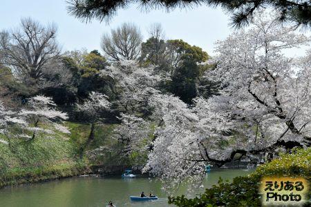 千鳥ヶ淵の桜 2019年